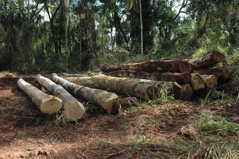 save the trees deforestation essay This free environmental studies essay on essay: deforestation is perfect for to both save their earnings and down of trees has an effect on the.