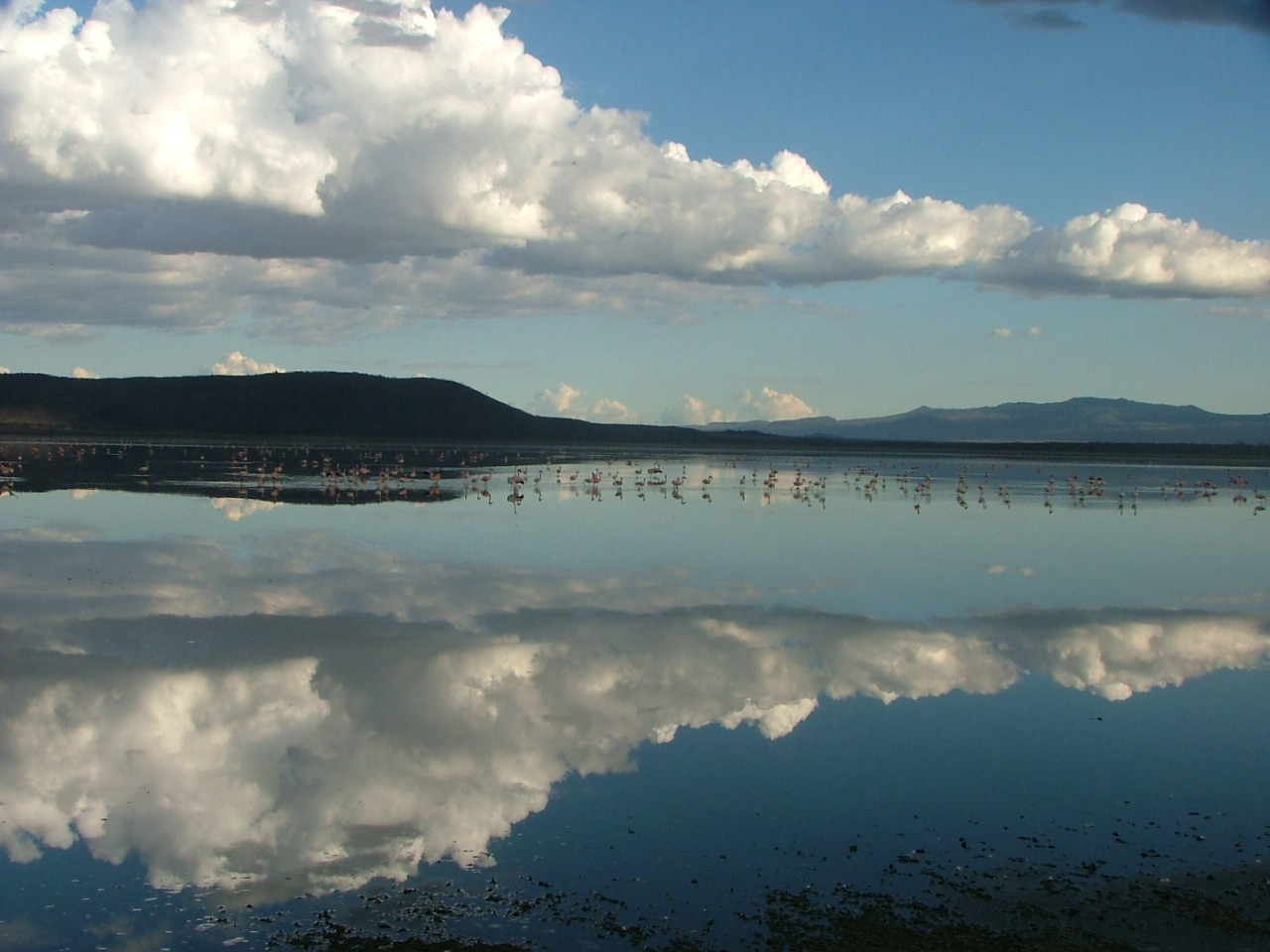 Flamingos and cloudy sky reflected in the clear waters of Lake Nakuru in the Lake Nakuru National Reserve in Kenya.