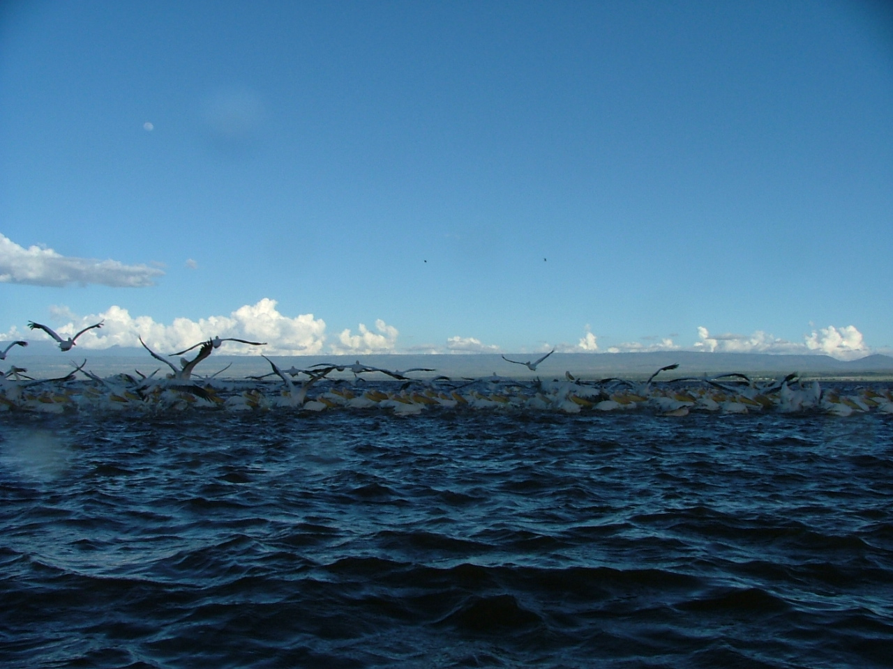 Taken from a boatride in Lake Naivasha in Kenya