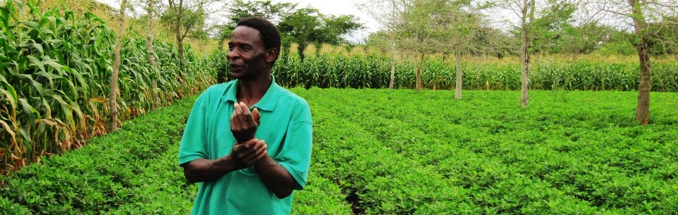 Farms In Zambia World Report Our Actions Tunza Eco
