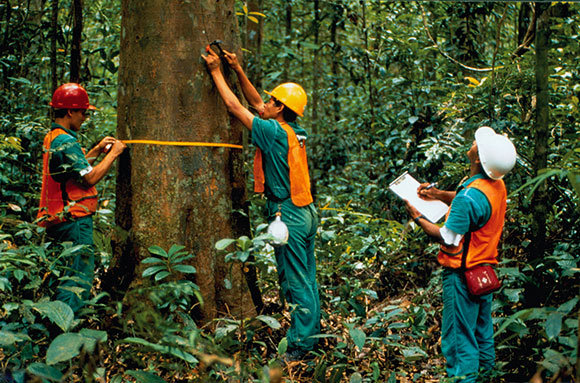Forest Resource Management : Why children and youth in africa should be involved