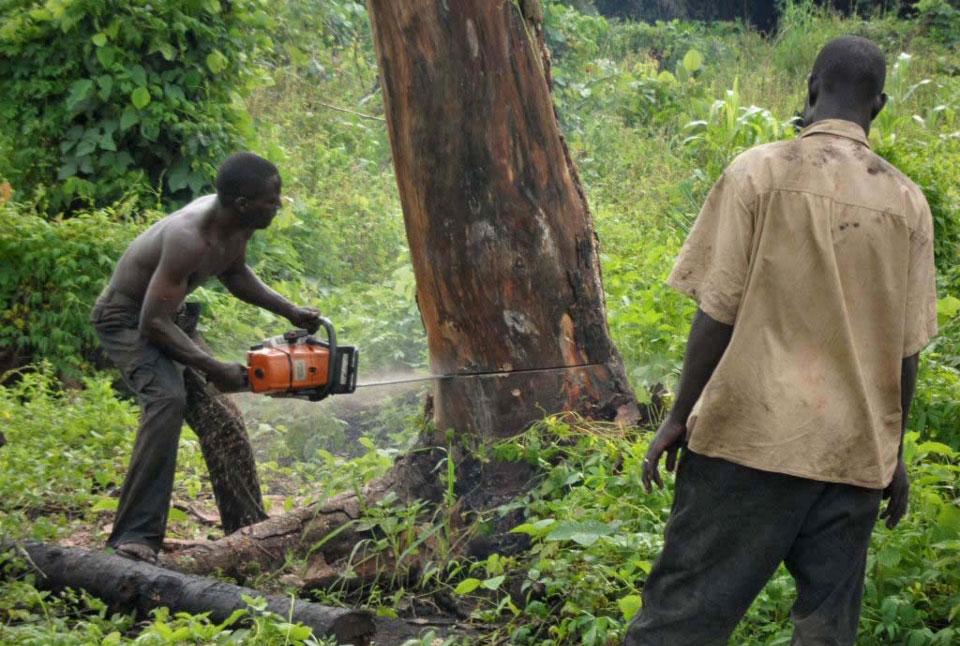 causes of deforestation essays