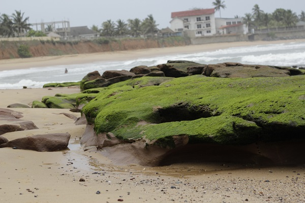 Algae Covered Beach Rock