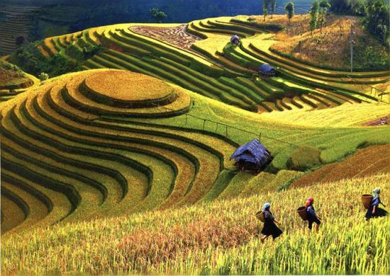 models of agriculture terrace farming ambassador report