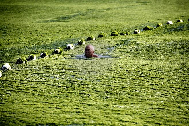 Algae Blooms In China