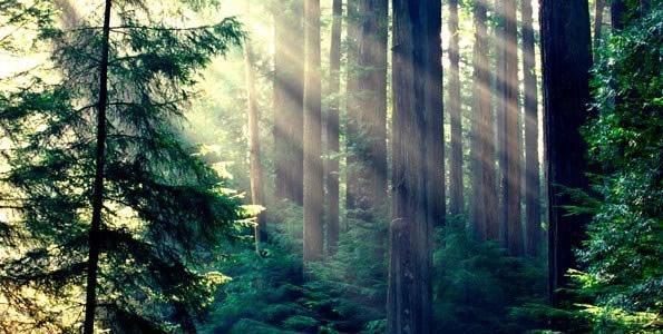 Karura Forest