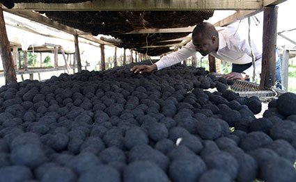 Briquettes made from human waste