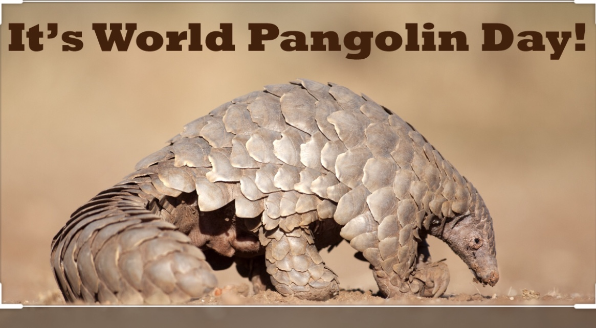 Facts about Pangolins.