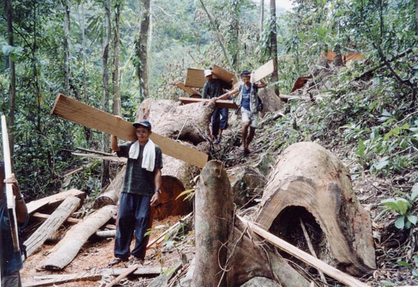 illegal logging int he philippines On march 29-30, 2002, the yale chapter of the international society of tropical  foresters convened social and natural scientists, resource.