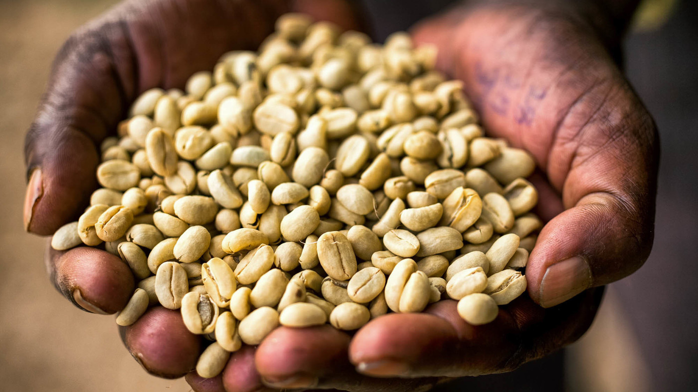 Ethiopian farmers coffee is disappearing because of climate change. Picture Credit: The Salt. NPR