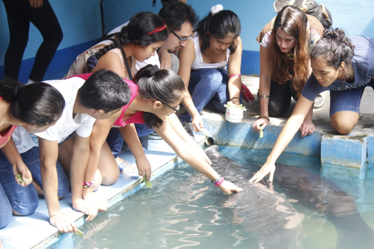 Monthly Event:A  glance at the Amazonian Manatee