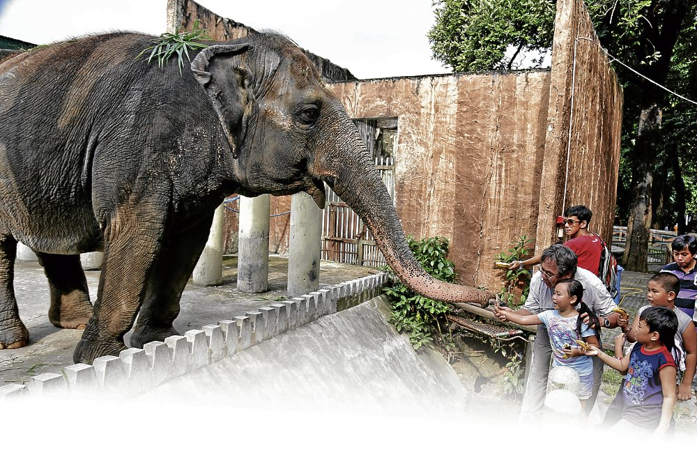 Mali, the elephant, linteracts with children who bring bananas