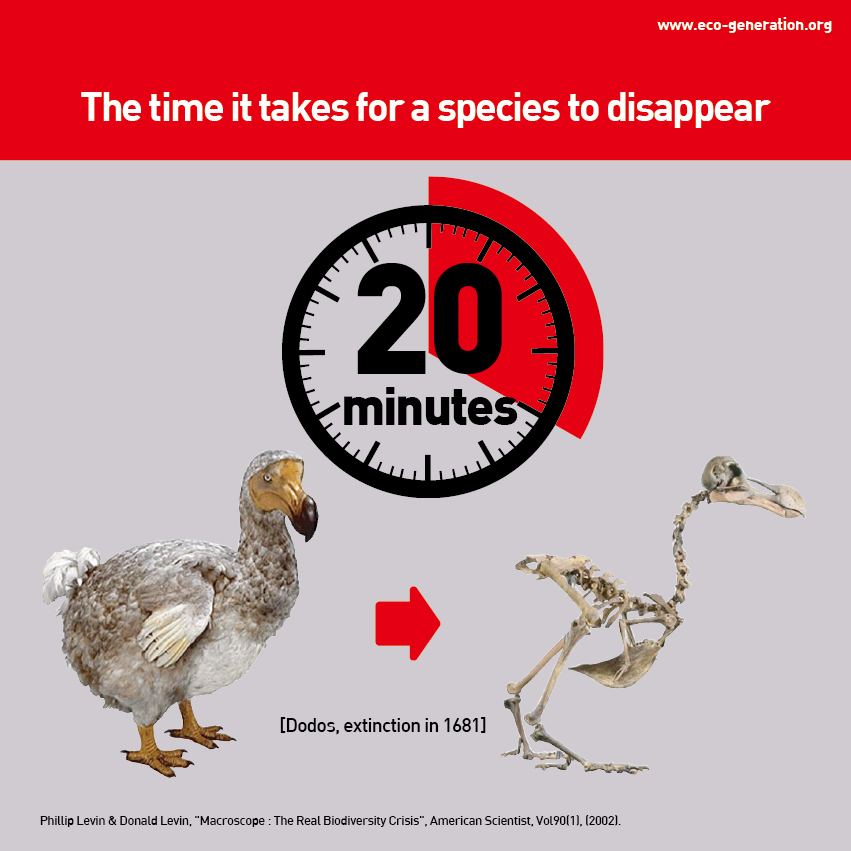 The time it takes for a species to disappear 20 minutes.