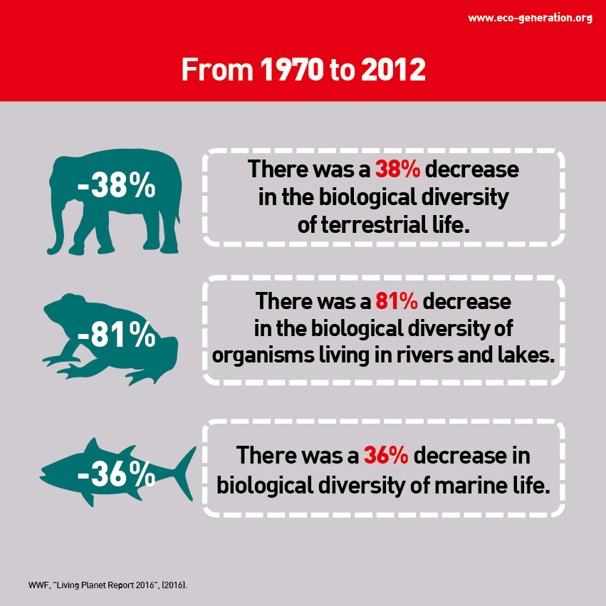 From 1970 to 2012, there was a 38% decrease in the biological diversity of terrestrial life.