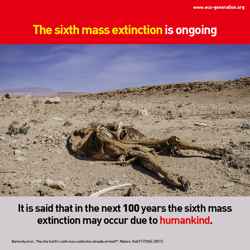 Ths sixth mass extincion is ongoing. It is said that in the next 100 years the sixth mass extinction may occur due to humankind.
