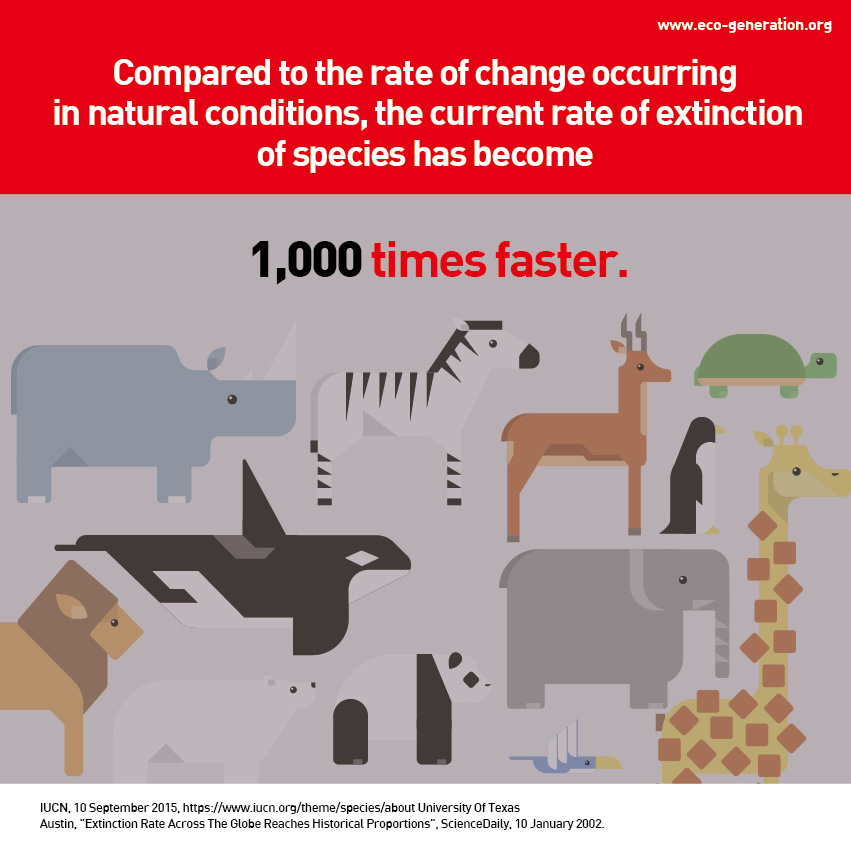 Compared to the rate of change occuring in natual conditions, the current rate of extinction of species has become 1,000 times faster.