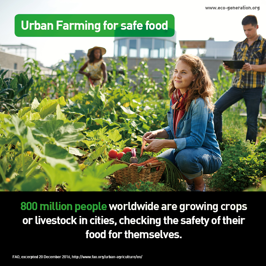 Urban farming for safe food. 800 million people worldwide are growing crops or livestock in cities, checking the safety of their food for themselves.