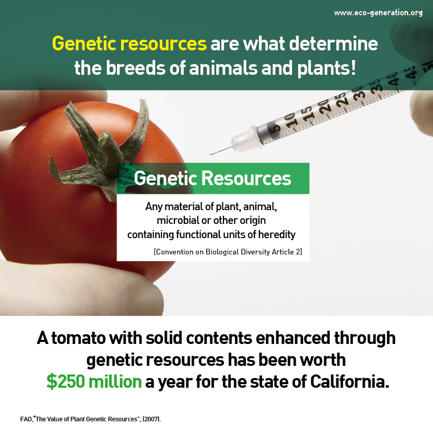 Genetic resources are what determine the breeds of animals and plants! A tomato with solid contents enhanced through genetic resources has been worth $250 million a year for the state of California.