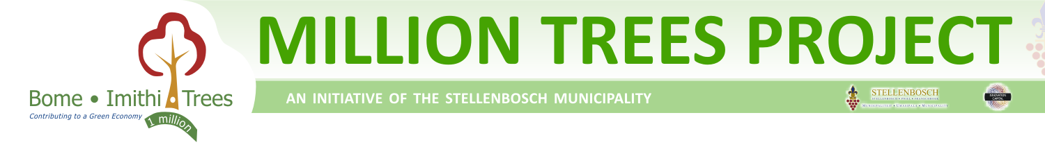 Project at home: Million Trees Initiative- Stellenbosch, WC